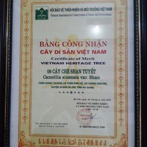 Chứng nhận cây chè shan tuyết là cây di sản Việt Nam