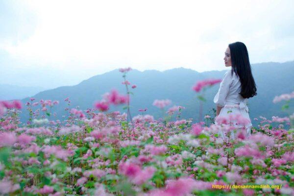 Ngắm hoa tam giác mạch ở Hà Giang