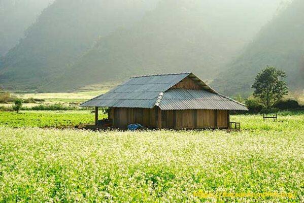 Mùa hoa ở Mộc Châu
